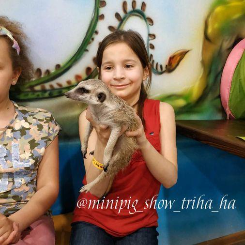 """Сурикат Джулик с детьми I Блог """"Всё о мини пигах"""""""