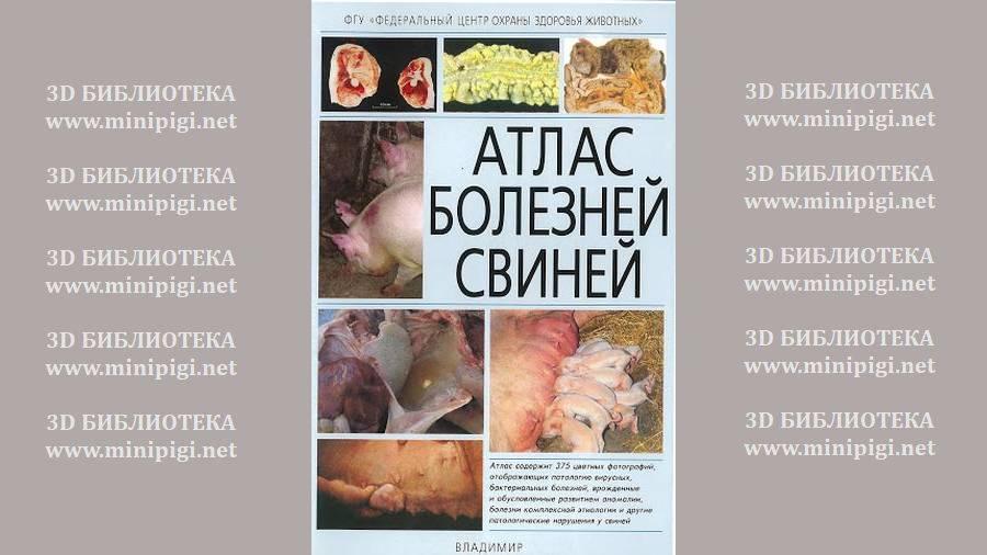 """Атлас болезни свиней I Сайт """"Всё о мини пигах"""""""