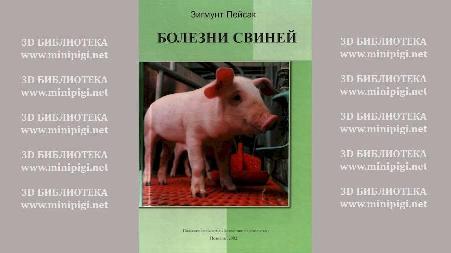"""Болезни свиней I Сайт """"Всё о мини пигах"""""""